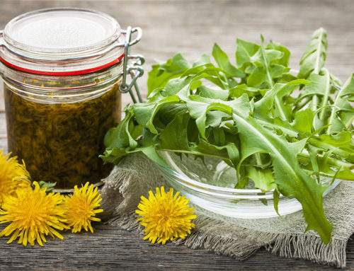 Dandelion, Your Backyard Herbal Remedy